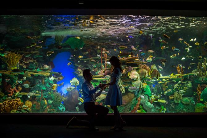 ripley's aquarium photos